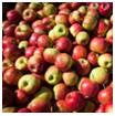 Khí Nitơ dùng trong bảo quản trái cây